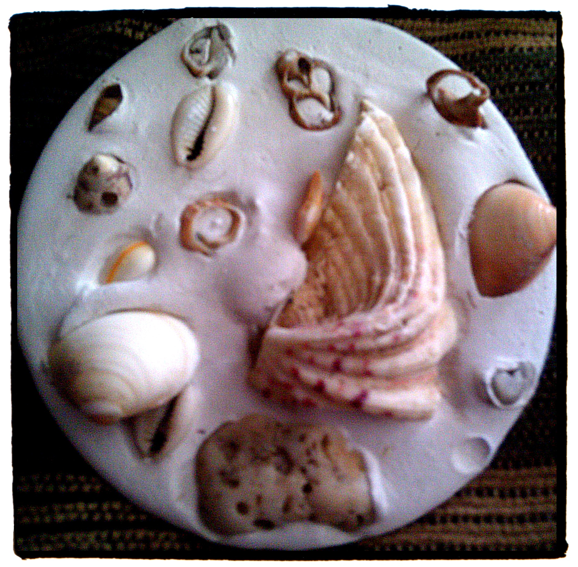 Snubnose embedded some shells on a plate made of plaster of paris