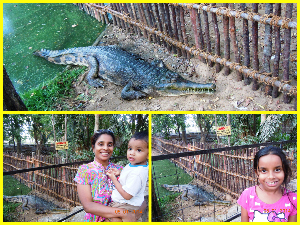 We three took turns posing alongside the gharial