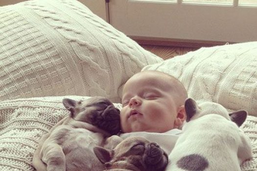 Adorable Dog and Baby Love