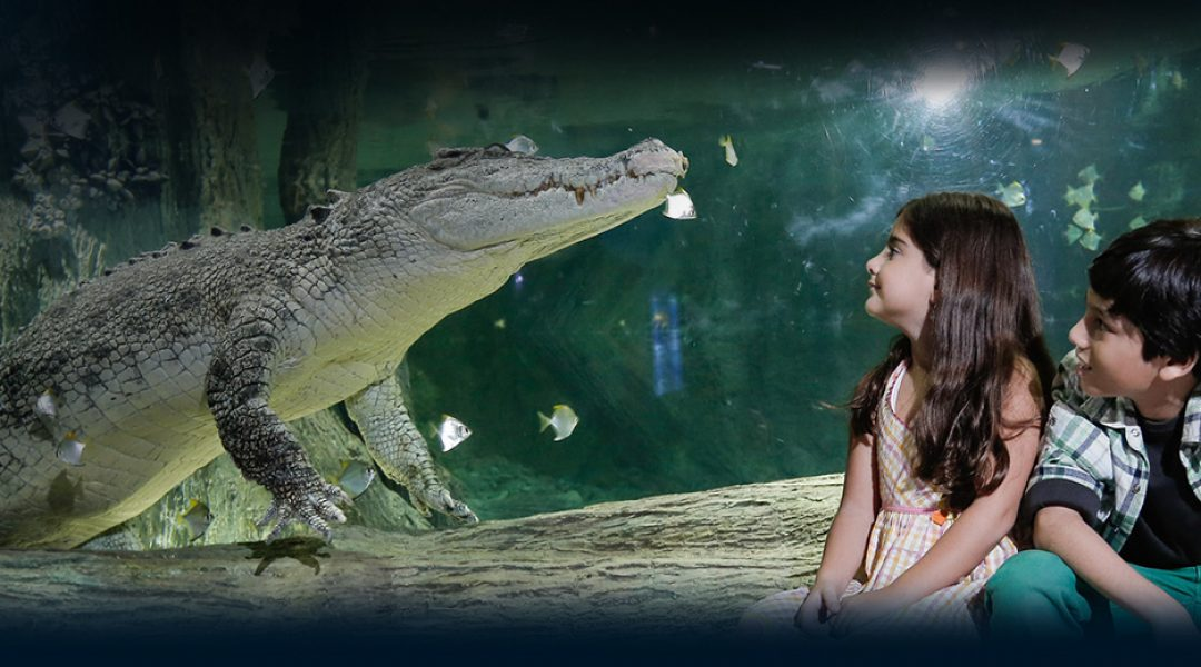 Face to face with the king croc
