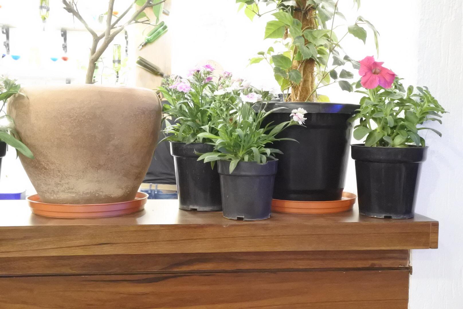 Pretty flower pots everywhere