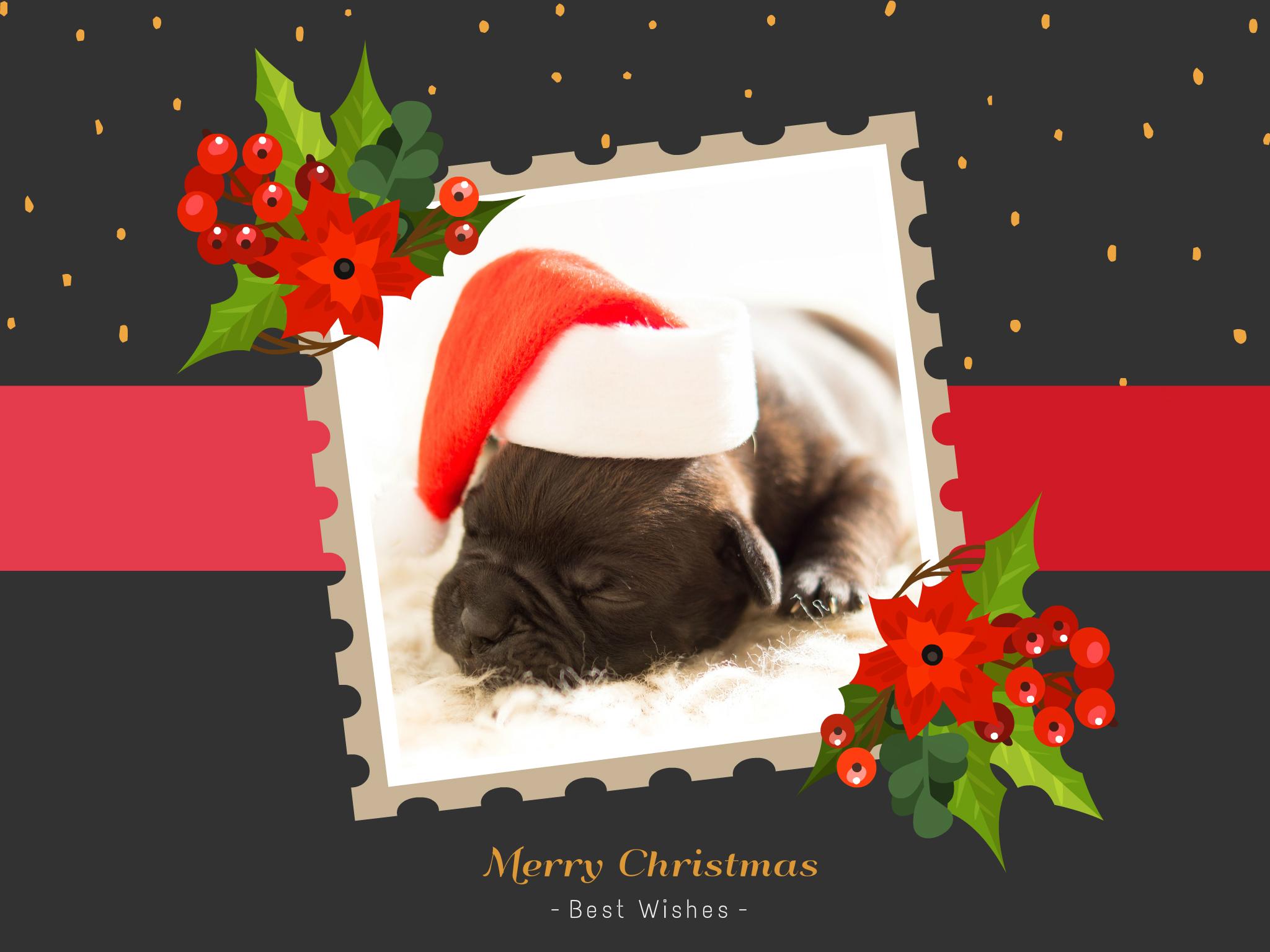 A cute puppy Christmas card