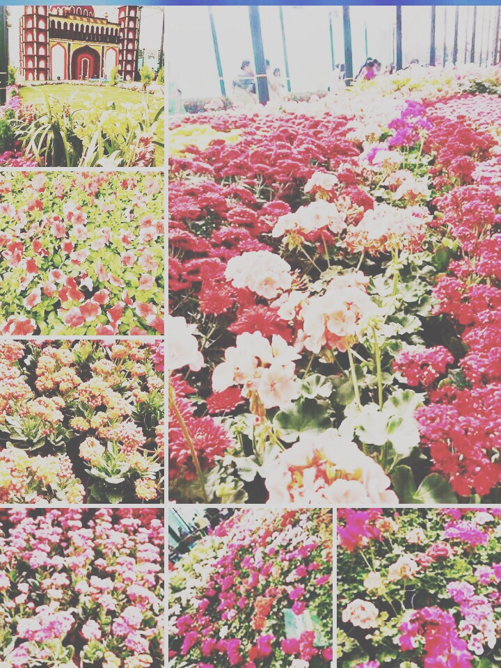 A plethora of flowers