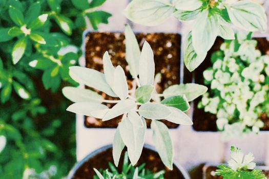 Five Aromatic Herbs You Can Grow Indoors