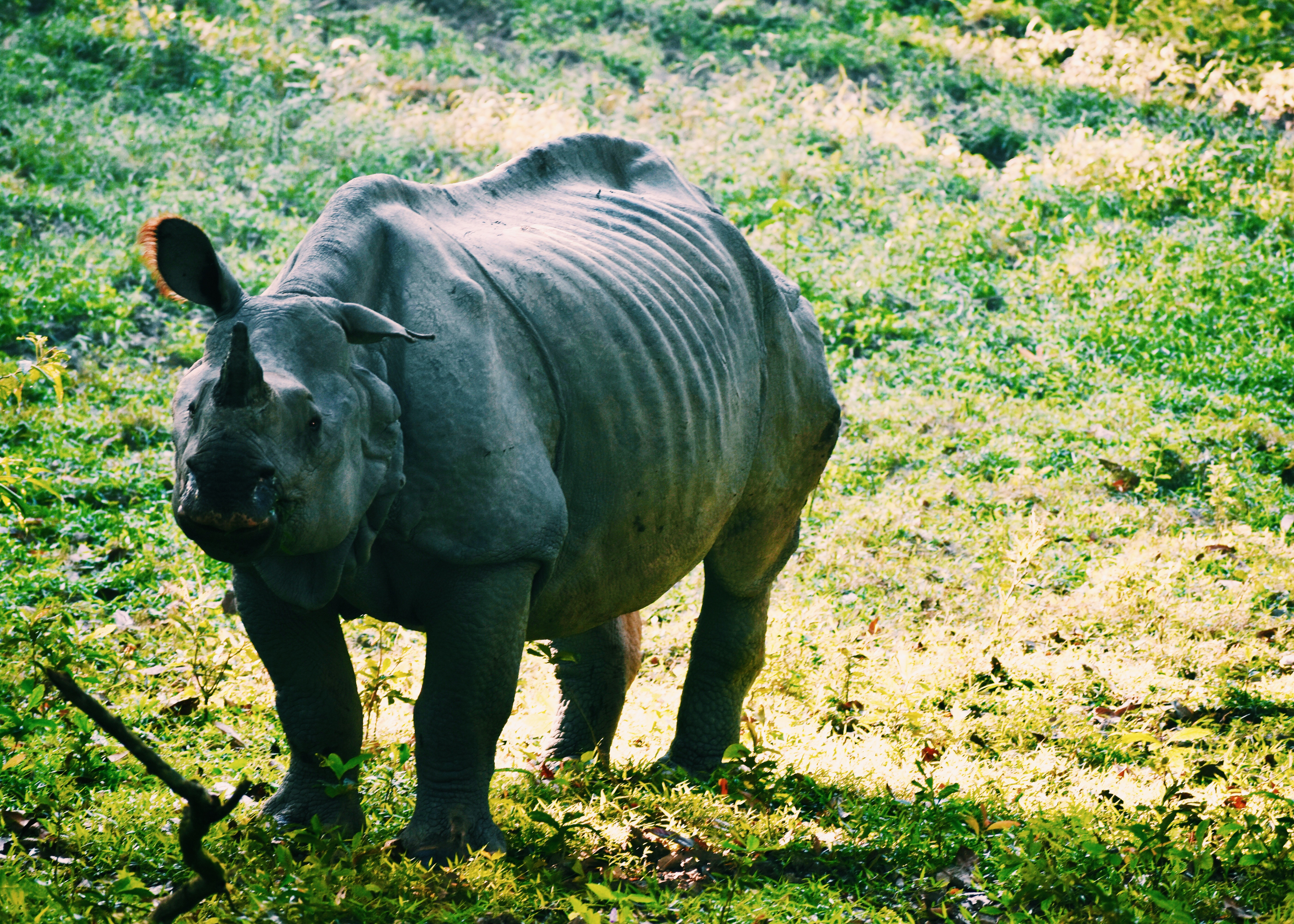 A friendly rhino
