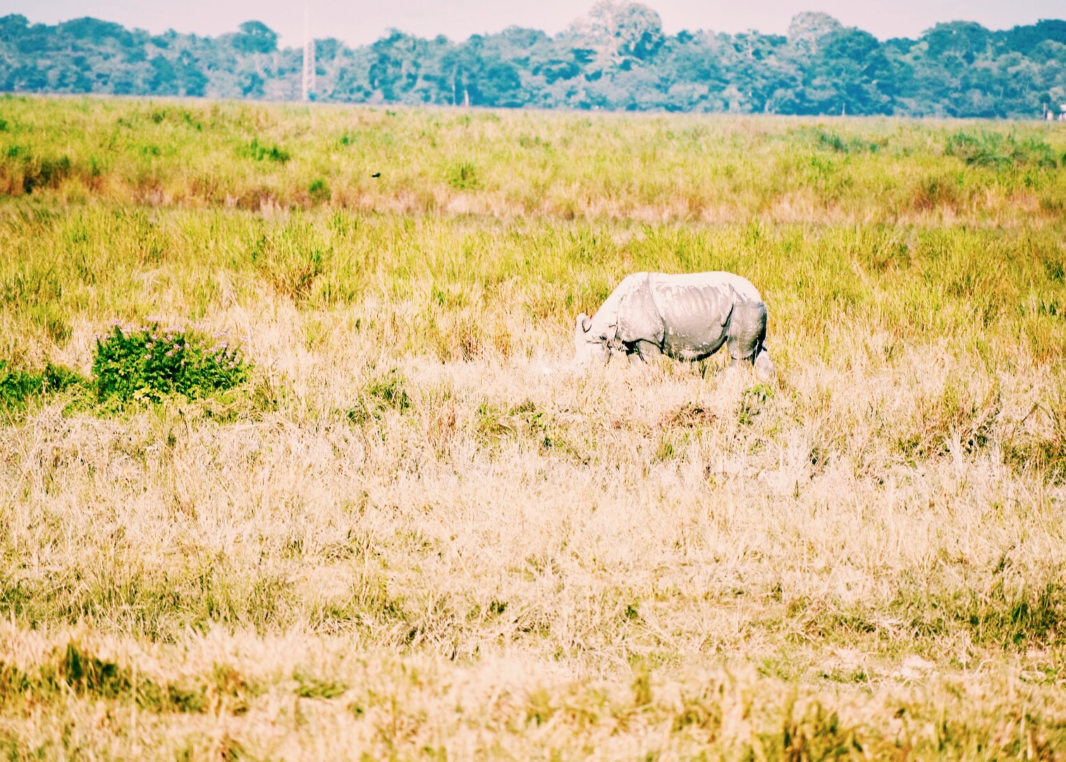 A rhino in the distance