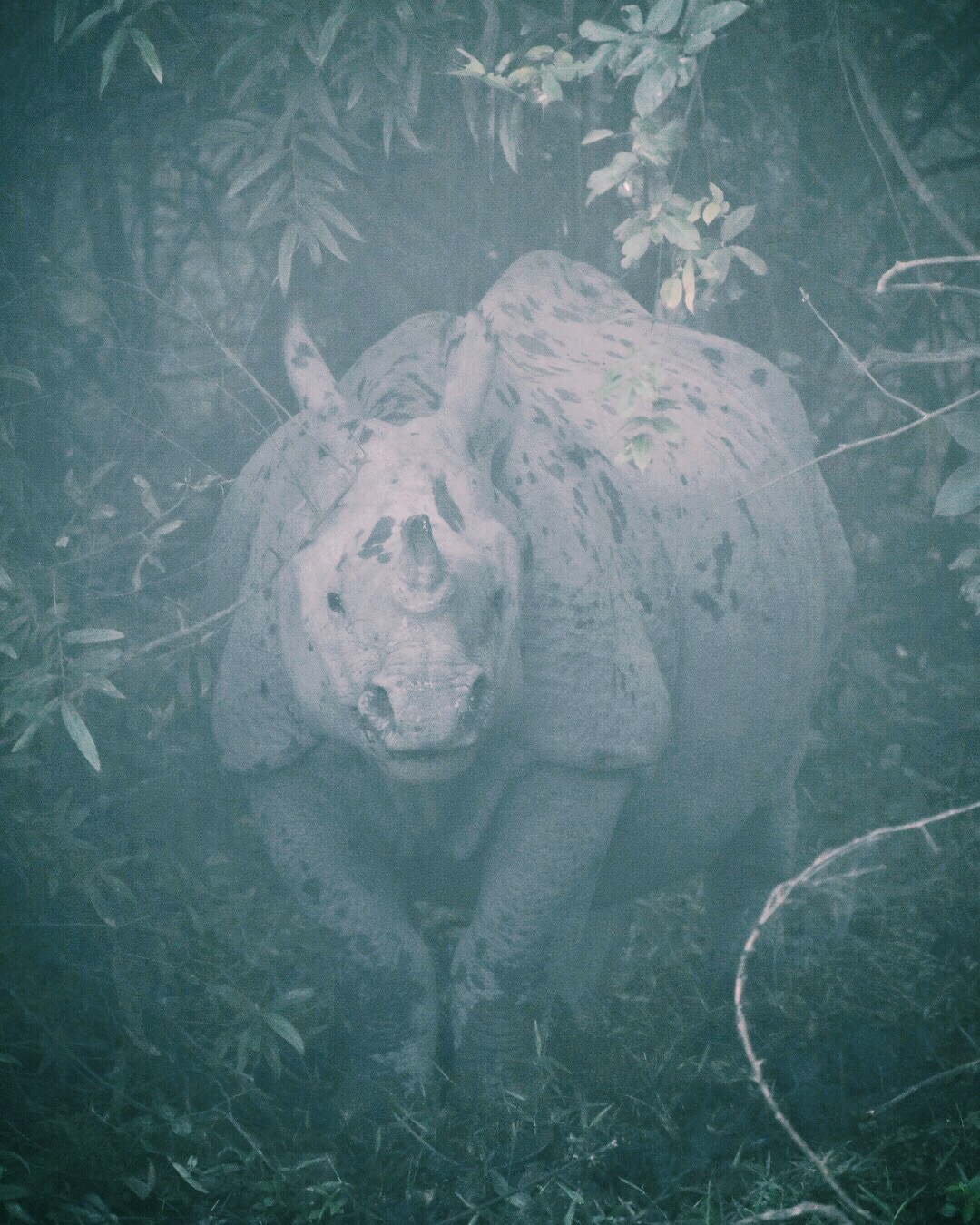 The first rhino of the morning