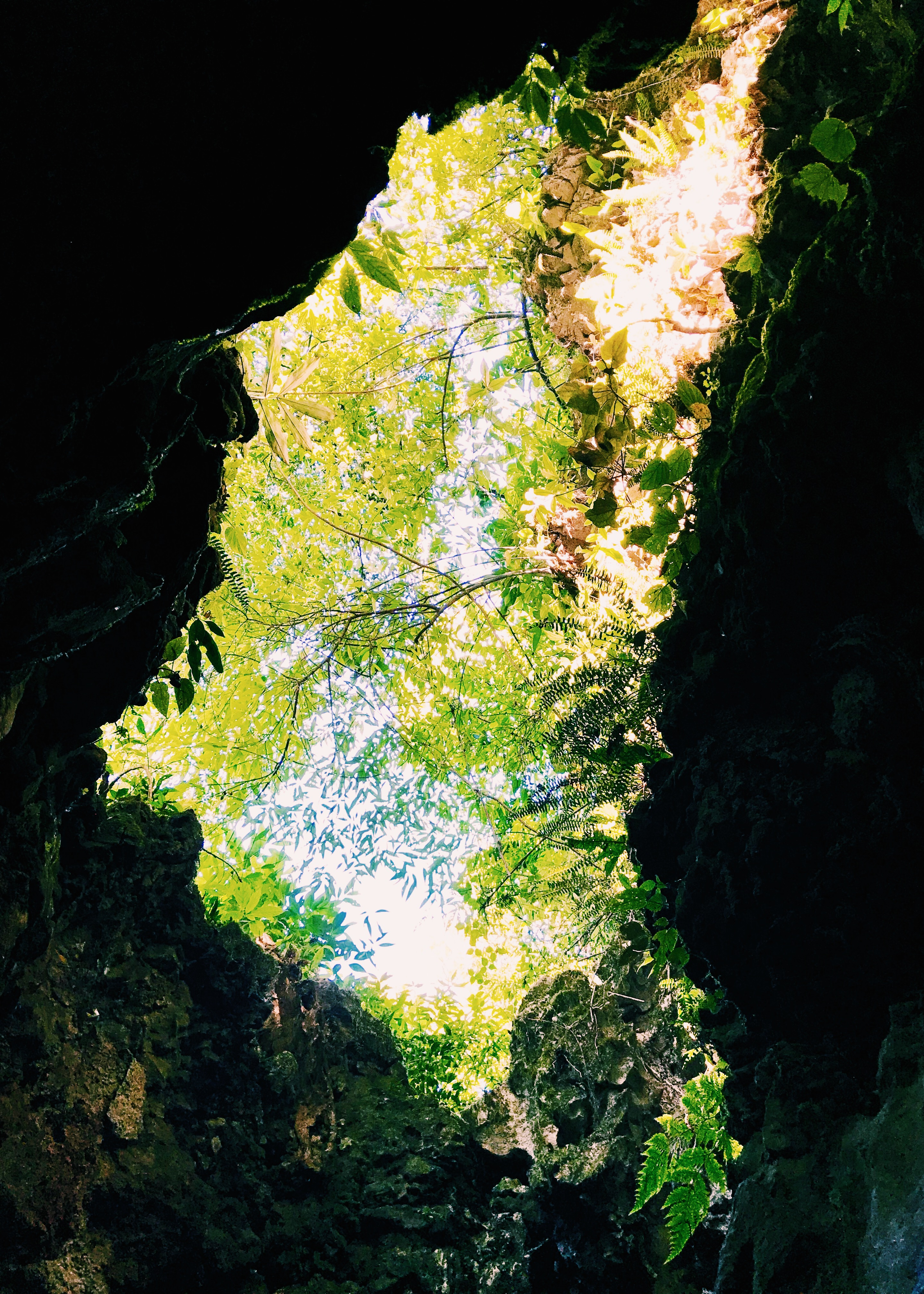The green of the trees above us as we climbed out of the cave